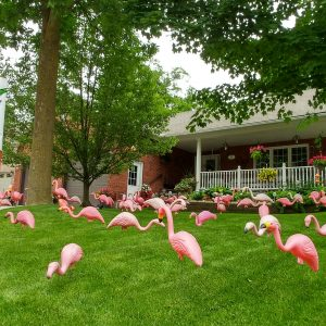 Flamingo for the